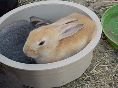 Buns in a Bowl - June 29 2015_opt